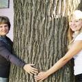 В Ейске обнаружили двухсот семидесяти летний старый дуб