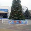 Главной городской елкой в Ейске станет 15-метровая сосна
