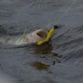 Вступило в силу ограничение на рыбалку