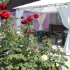 Два дома в одном дворе. ул. Морская и ул. Сазонова. Вар №26