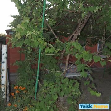 Домик на ул.Одесская вариант № 34